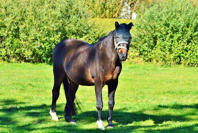 Horse, Stallion, Pasture, Horse Head, Coupling, Mane