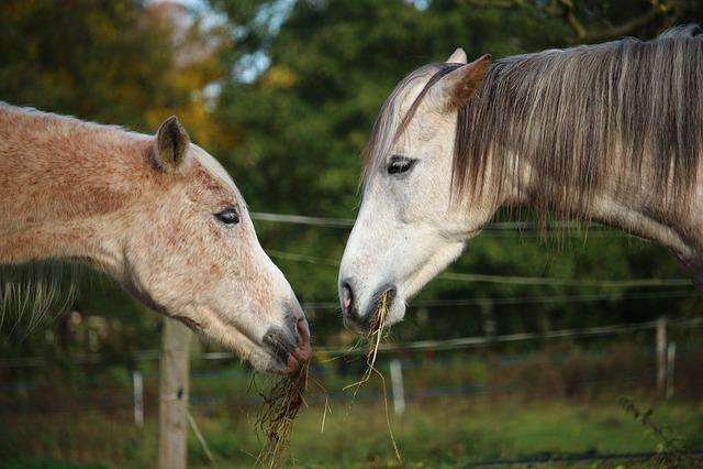 Horse, Mold, Thoroughbred Arabian, Horse Head, Pasture