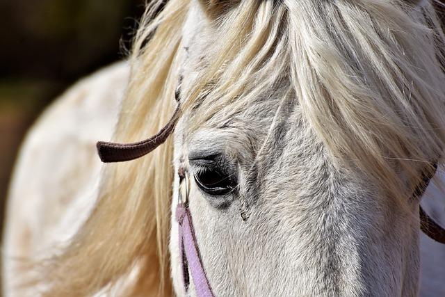 Horse, Horse Head, Mold, Reiterhof, Stall, White Horse