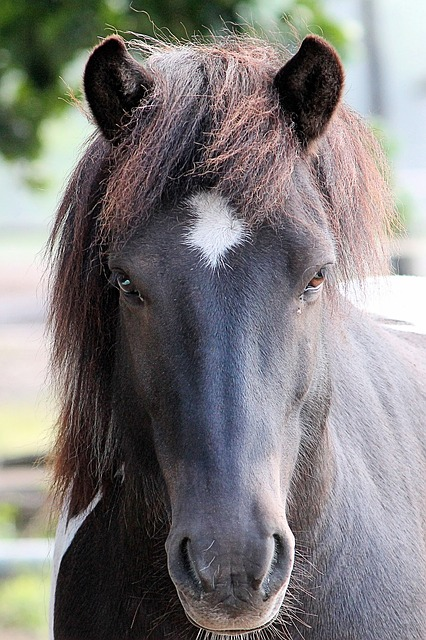 Horse Head, Horse, Pferdeportrait, Animal Portraits