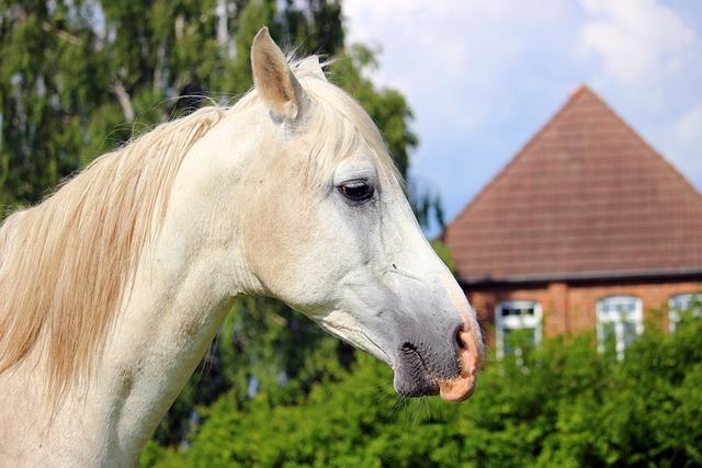 Horse, Mold, Thoroughbred Arabian, Horse Head, Grass