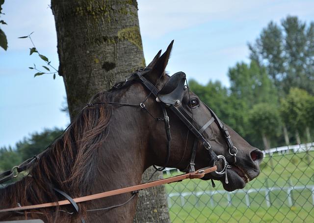 Horse, Horse Racing, Race, Horseback Riding