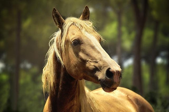Horse, Animals, Equine, Love Animals, Nature
