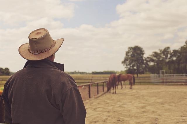 Cowboy Hat, Cowboy, Man, Horse, Ride, Summer