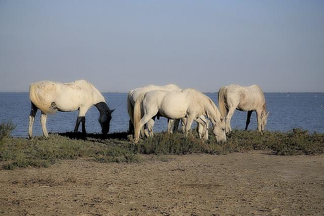 Horse, Mane, Horseback Riding, Equine, Animals