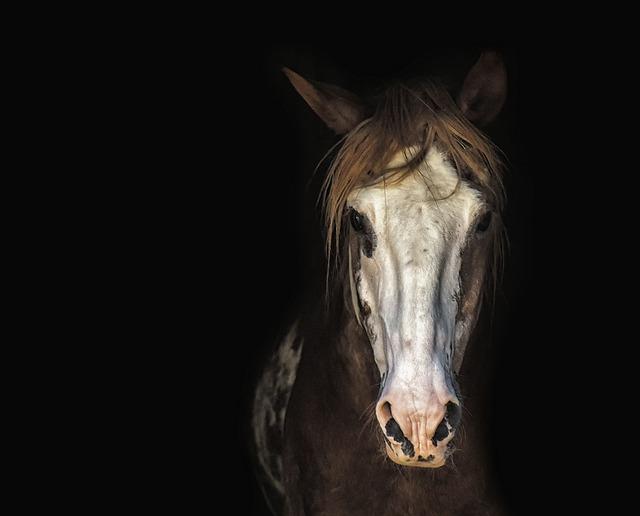 Horse, Mare, Horse Head, Portrait, Mane