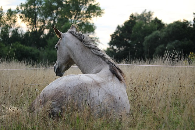 Horse, Mold, Thoroughbred Arabian, Pasture, Mane, Mare