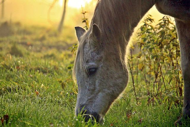 Horse, Mold, Fog, Thoroughbred Arabian, Pasture, Autumn