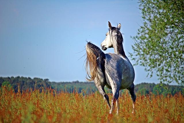 Horse, Mold, Trot, Thoroughbred Arabian, Pasture