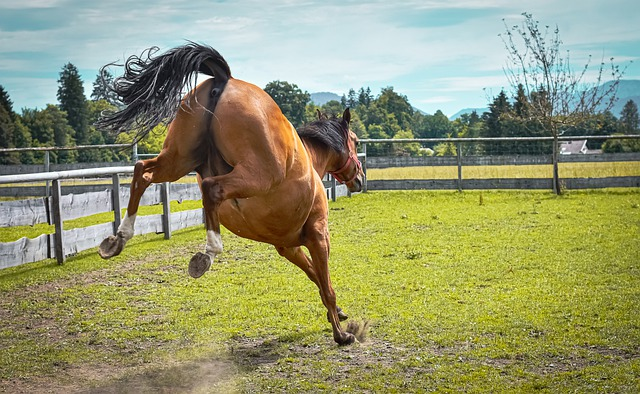 Horse, Left Out, Pasture, Play, Meadow, Coupling, Funny