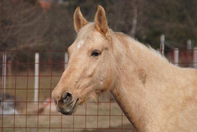 Horse, Plavý, Animal, Portrait, Sun, The Head Of The