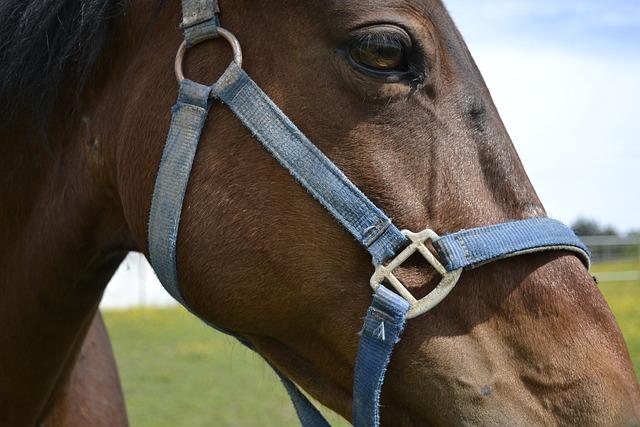 Farm, Sport, Reiter, Cavalry, Portrait, Horse, Halter