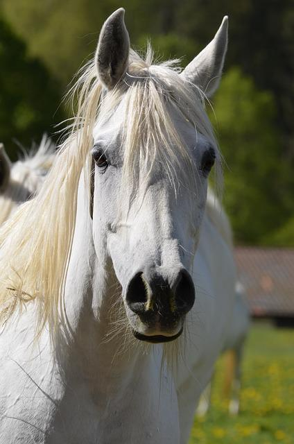 Animal, Mane, Nature, Mare, Horse, Freedom, Portrait