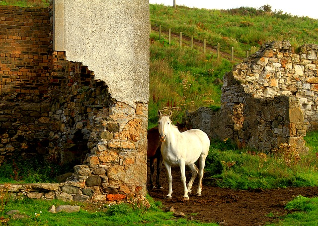 Stone, Horse, Grass, Travel, Nature, Rock, Old, Farm