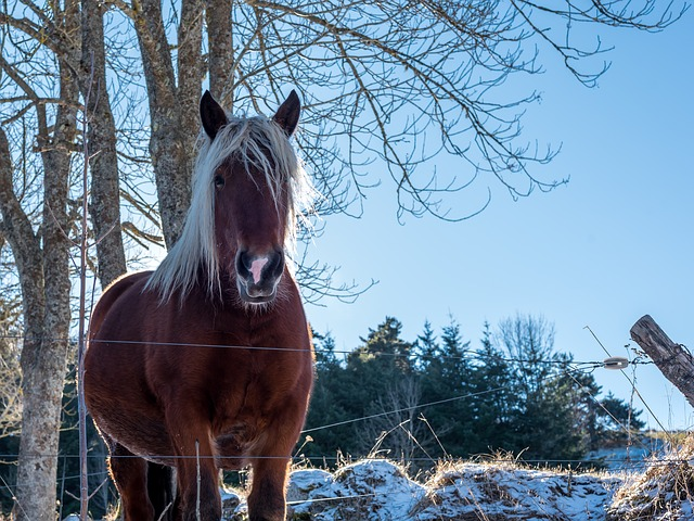 Winter, Snow, Cold, Nature, Rural, Animal, Horse