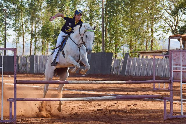 Horse, Equestrianism, Stallion, Equitation, Jump, Sport