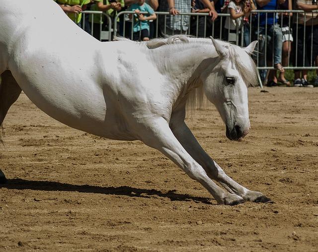 Horse, Horseback Riding, Dressage, Standard