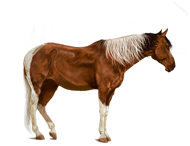 Horse, Brown, Art, Digital Artwork, Standing, Animals