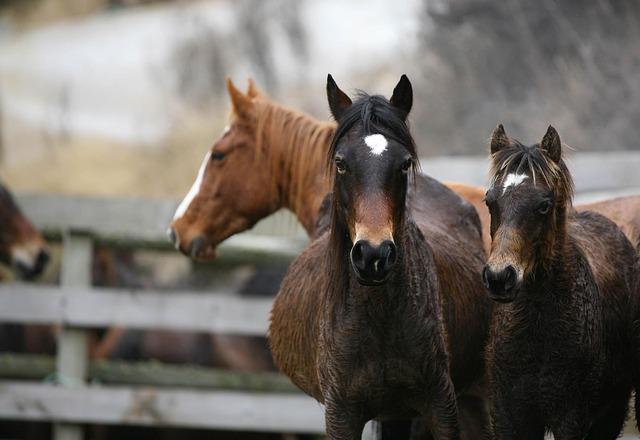 Three, Amazing, Horses