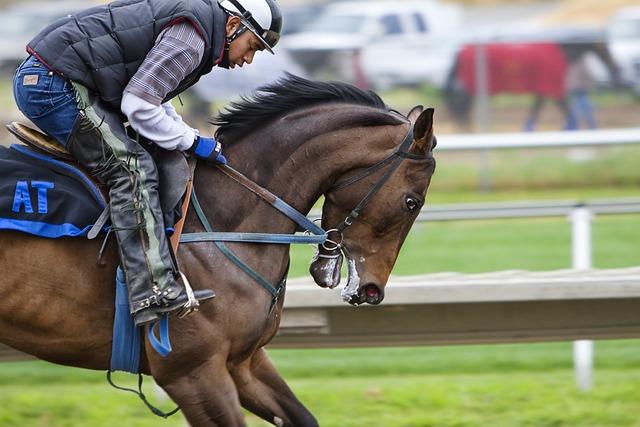 Horse, Horses, Animal