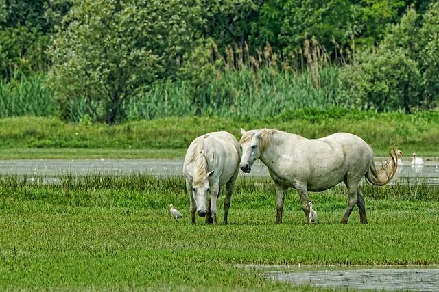 Nature, Animals, Horses, Mold, White Horse, Mammal