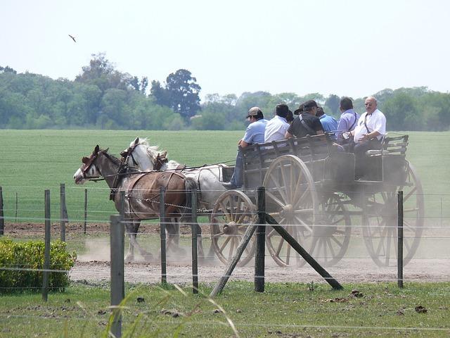 Argentina, Tourists, Entertainment, Cab, Horses