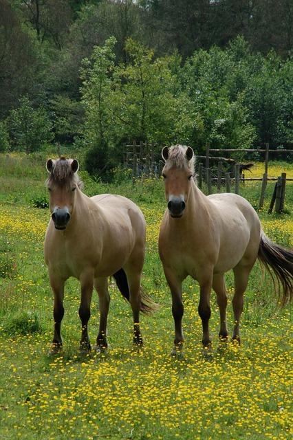 Mammals, Meadow, Horses, Buttercup, Grass, Pasture