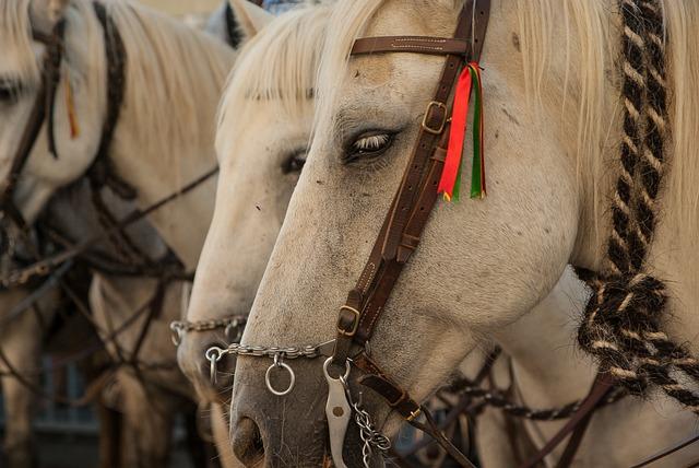 Camargue, Horses, Harness, Feria