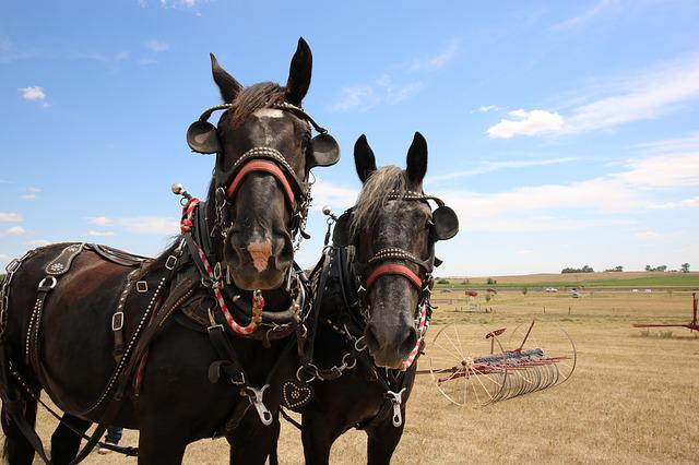 Farm, Rural, Horses, Team, Horsepower, Farm Equipment