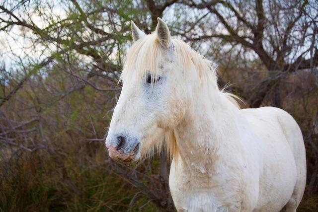 Horse, Camargue, White, Horses, Jumper, Gardian