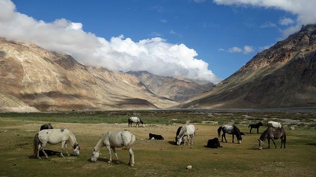 Himachal, Spiti, Horses, Himalayas, Travel, Mountains