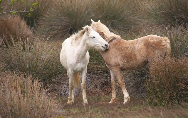 Animals, Horses, Youth, Nature