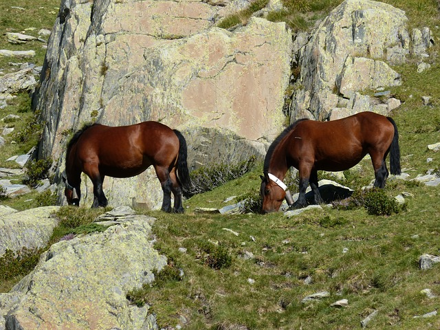 Horses, Rocks, Pyrenees, Wild Nature, Port Of Tavascan