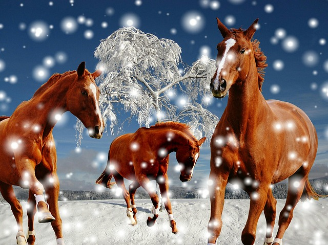 Horses, Coupling, Winter, Snow, Play, Paddock, Wintry