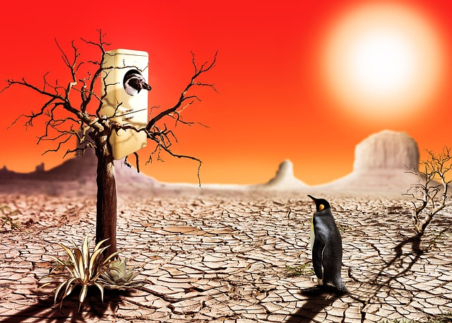 Photomontage, Penguin, Desert, Hot, Refrigerator