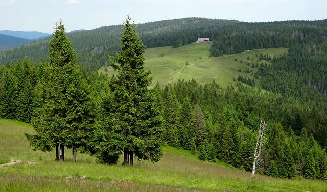 Turbacz, Hot, Poland, Mountains, Tree, Beauty