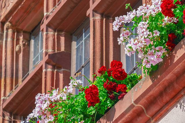 Flower, Geranium, Building, Flowers, Bloom, House