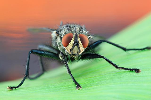 Fly, Housefly, Macro, Compound Eyes, Insect, Close