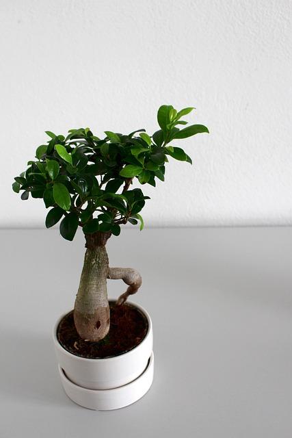 Leaf, Growth, Plant, Pot, Nature, Tree, Houseplant