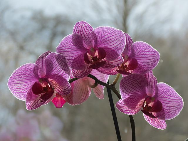 Orchideae, Houseplants, Blossom, Bloom