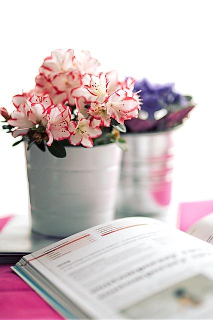 Azalea, White Pot, Book, Flower, Houseplants