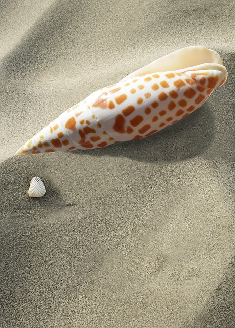Sea Snail, Snail, Shell, Sea, Holiday, Memory, Housing