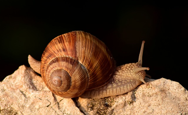 Snail, Close, Shell, Reptile, Animal, Housing, Spiral