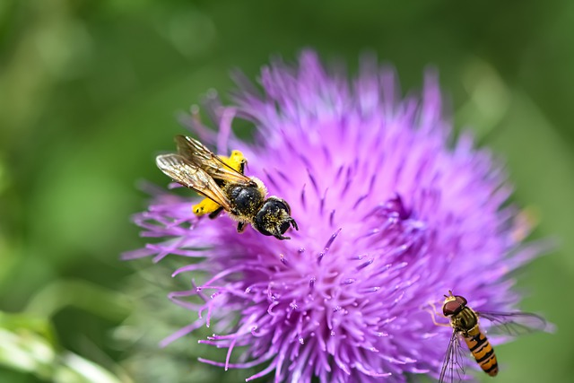 Thistle, Flower, Insect, Bee, Hoverfly, Nature, Garden