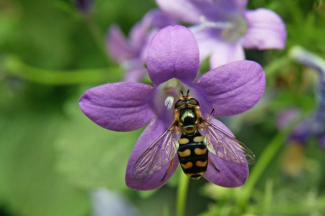Insect, Hoverfly, Blossom, Bloom, Macro, Close Up, Wing
