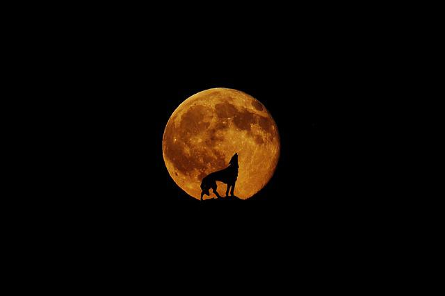 Moon, Wolf, Full Moon, Howl, Mystical, Night