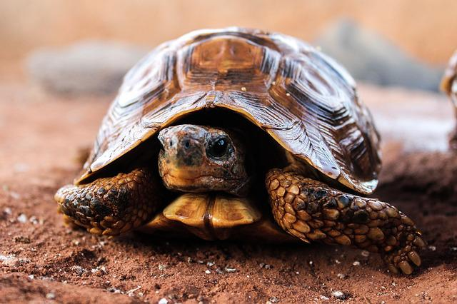Turtle, Nature, Slow, Hull, Animal, Silvestre