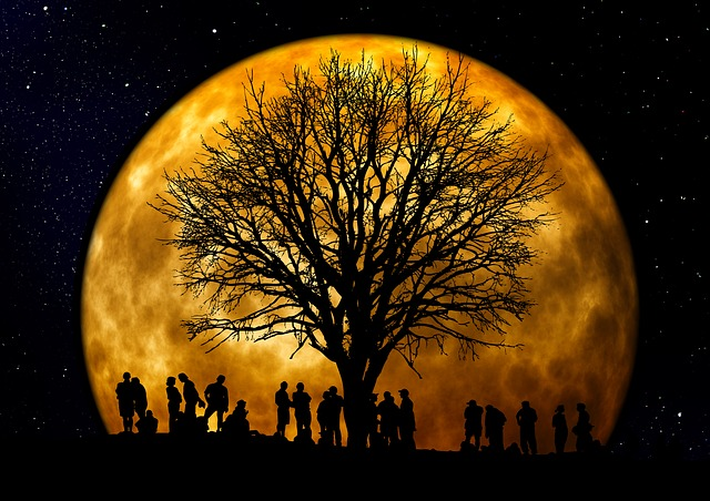 Tree, Kahl, Moon, Human, Group, Silhouette, Background