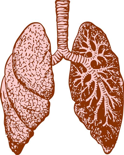 Lungs, Organ, Human, Diagram