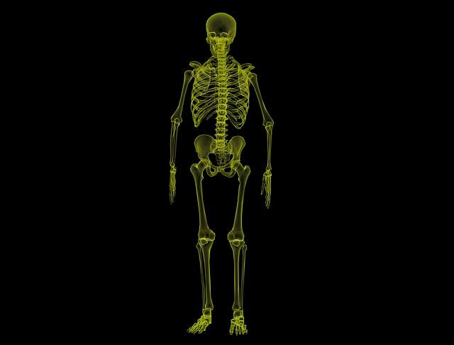 Human Skeleton, Anatomy, Bones, Skeleton, Medical, Body